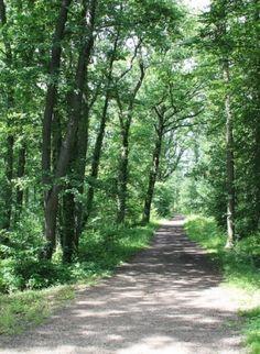 Découvrez le #tourisme en #forêt avec l'Onf