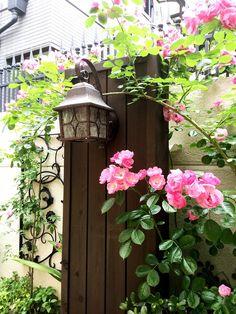 ガーデン パーゴラ バラの庭 ザ・シーズン