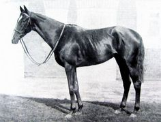 Lady Angela. Perhaps the most important broodmare in Canadian turf history in the past 75 years. She is by Hyperion - Sister Sarah by Abbot's Trace. Lady Angela was purchased by E.P. Taylor in England, bred to Nearco and produced Nearctic, the sire of Northern Dancer. She also produced Lady Victoria, the dam of 10 time leading Japanese sire Northern Taste. Lady Angela's contribution of Nearctic and his offspring sons Northern Dancer and Icecapade, his daughter Nangela continue the…