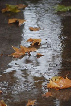 100+ Pleasant Rainy Day Rainy Day Photography, Abstract Photography, Rainy Day Pictures, Smell Of Rain, Rain Days, Rain Storm, Rain Clouds, Mists, Photo Art