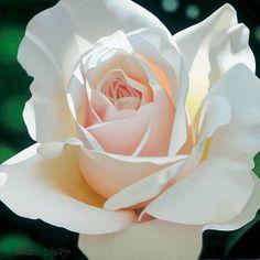 "~Brian Davis suite 1 of 3 ""French Lace Aglow"" Beautiful Roses, White Flowers, Beautiful Flowers, Art Floral, Brian Davis, Ronsard Rose, Rose Art, Watercolor Rose, Fine Art Gallery"