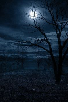 Moonlight on clouds ... winter tree silhouettes. My favorite time. Beauty, calm, alive!!! More
