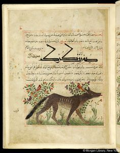 "Wolf in right profile, in background, birds in flowering plants, in ""Manāfi˓-i al-ḥayavā"" (""The Benefits of Animals""), fol. 19r, ca. 1297/1300, by Abu Sa'd' Ubayd-Allah ibn Ibrahim, known as Ibn Bakhtishu (d. 1058), Perse, Pierpont Morgan Library MS M.500"