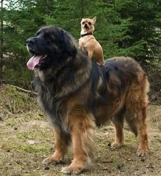 Big dog, little dog