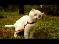 The funniest cat EVER!!  I laugh every time I watch this!