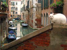"""ღღ Lord of the Canals -- """"O sole, o sole mio....."""""""