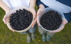 Summer urban foraging Pick wild berries in local parks - ParentMap