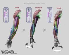 m_9882578_anatomy.jpg (800×640)
