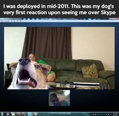 """I was deployed mid 2011. This was my dog's very first reaction upon seeing my face over Skype."" ~ Dog Shaming shame"