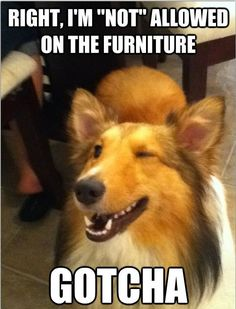 I'm sure this what Penny is thinking before she pushes the plastic covering off of the sofa to nap.