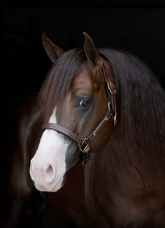 Spat Split And White (AQHA) Love this look over the nose