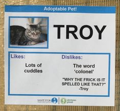 Rescue Cats Given Hilarious Personalities To Help Them Get Adopted