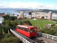 New Zealand Wellington Cable car and Kiwi obsession (Green Thickies/Green Smoothies)