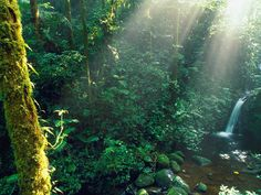 #Teach Through Educational #Travel: Learn about the Monteverde Cloud Forest in Costa Rica