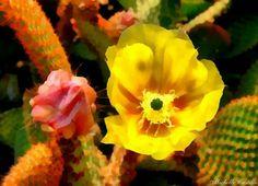 Arizona, US