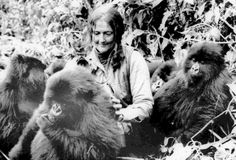 an analysis of the gorillas in the mist by dian fossey Gorillas in the mist is a 1988 american drama film directed by michael apted and starring sigourney weaver as naturalist dian fossey it tells the true story of her work in rwanda with mountain gorillas and was nominated for five academy awards.