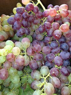 Grapes from Redmond Saturday Market vendor Sunflower Farm!