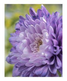 Chrysanthemum (Basic) .They smell fresh, not pretty.