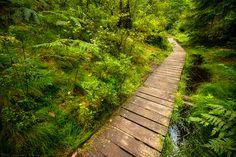 Through Green by r3novatio.deviantart.com on @deviantART