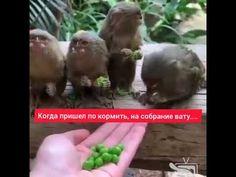 #Shorts Мням, мням... - YouTube