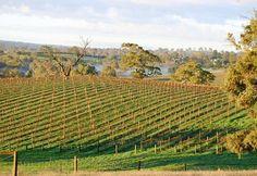 Featured Winery: Thorn-Clarke: Barossa