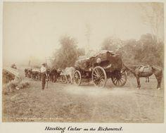 hauling Cedar on the Richmond River, NSW
