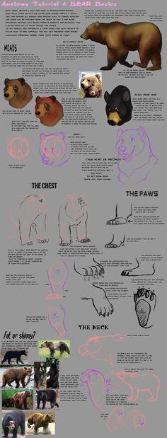 Anatomy Tutorial: Bear by AddictionHalfWay on DeviantArt Cat Anatomy, Animal Anatomy, Anatomy Study, Anatomy Reference, Drawing Reference, Anatomy Drawing, Bear Drawing, Drawing Tips, Animal Sketches