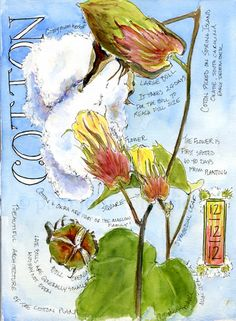 High cotton - the cotton plant has the prettiest flowers, too. Artist Pam Brickell   #South #Southern