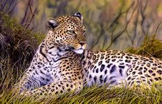 Leopard Oil Painting by Jason Morgan