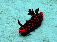 Beautiful Sea Slugs