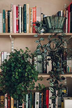 Bookshelf styling with plants
