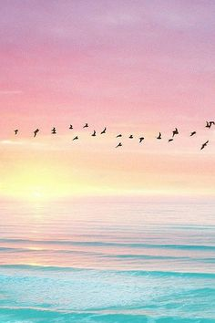 Birds flying against skyline - sunset, pink sky, blue ocean (contrast) Pink Sky, Pink Blue, Belle Photo, Pretty Pictures, Beautiful Landscapes, Wallpaper Backgrounds, Phone Wallpapers, Beach Wallpaper, Sunshine Wallpaper