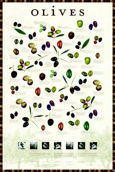 Olive Poster! (: All you need to know... #oliveinfo