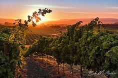 Sunrise Vineyard