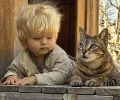 Siamo a Misiones, in Argentina. I personaggi della nostra storia sono otto fantastici gatti che si sono presi cura per giorni di un bambino, figlio di un...