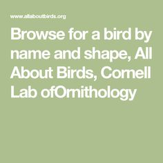 Browse for a bird by name and shape, All About Birds, Cornell Lab ofOrnithology