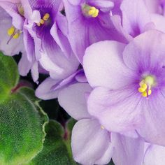Flower Photography print purple violet wall decor for