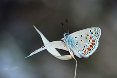 Butterfly by Necdet Yasar on 500px