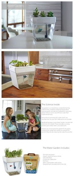 Bring the garden inside with a self-cleaning fish tank that grows food! The…