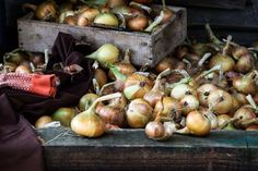 Besides using a canner, here are some tips for storing onions for the long term so you can enjoy your tasty homegrown produce all year long. Storing Onions, Red Wind, Vertical Vegetable Gardens, Pickled Onions, Fermented Foods, Preserving Food, Quick Easy Meals, Cooking Tips, The Help