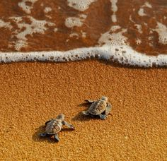 Would love to watch baby turtles hatch and run for the beach!
