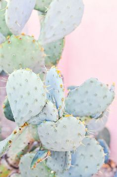 #ProperPrintables \ Cactus Wallpaper Download