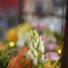 Farm chic #mossmountainfarm #stargazerbarn #joy #americangrown #pallensharethebounty #flowers