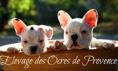 Aidez nous a construire une maternité et un parc d éveil pour l élevage de bouledogue français des Ocres de Provence.