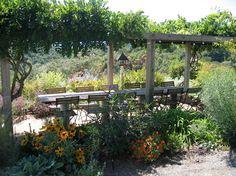 Sonoma Winery Home - contemporary - patio - san francisco - Suzette Sherman Design