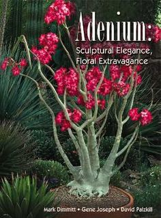 The Adenium Pages