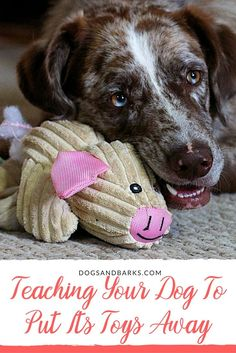 As a dog owner, one of the first things that you will want to teach your pup is how to put their stuff away.