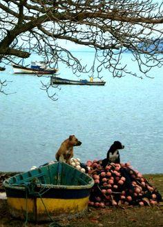 Dogs in Buzios, Rio de Janeiro ,Brasil