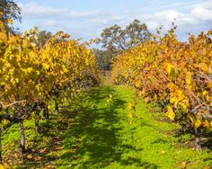 Our Vineyards | Wilderotter Vineyard