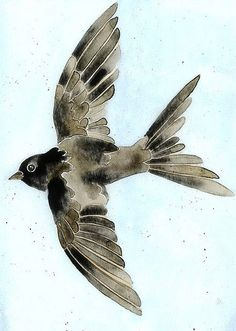 Swallow for Avian label | Flickr - Photo Sharing!